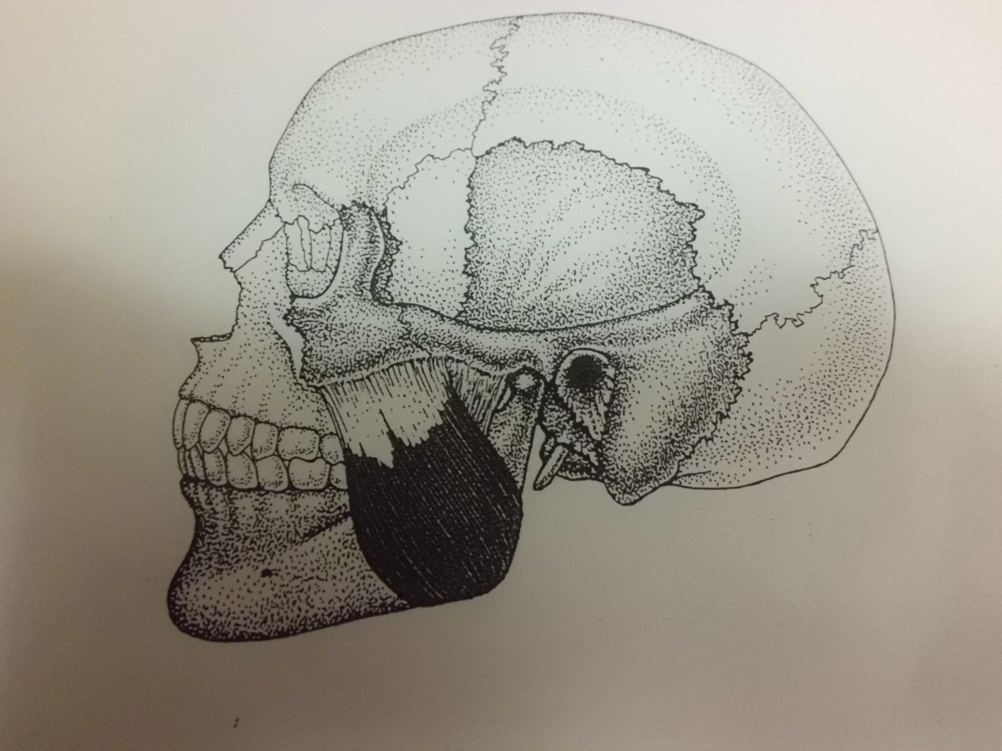 肩こりの鍼灸治療について (自費)_e0096277_18452482.jpg