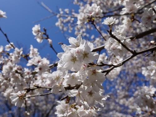 春の花_b0236186_10532314.jpeg