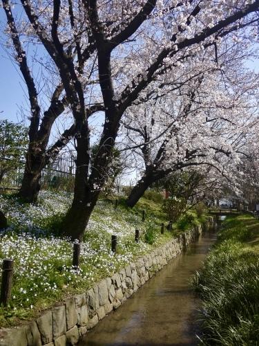 春の花_b0236186_10535052.jpeg