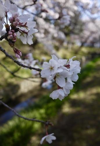 春の花_b0236186_10541617.jpeg