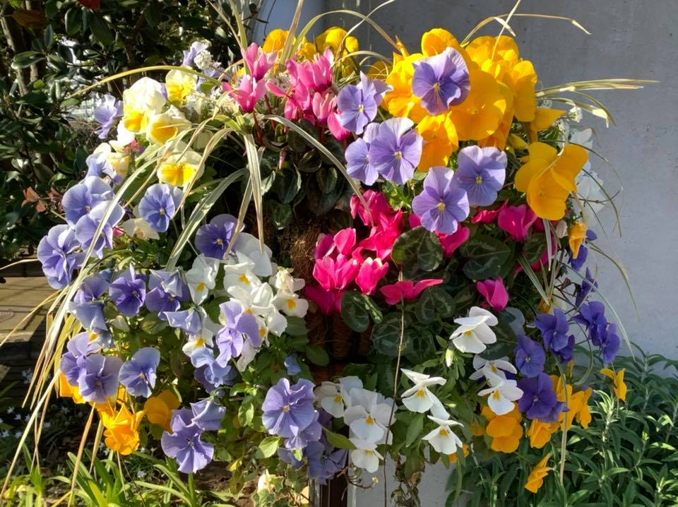 春の花_b0236186_10545182.jpg