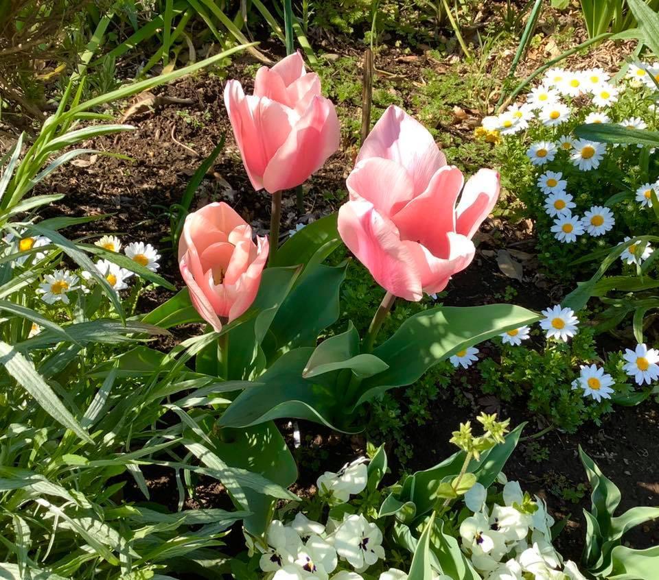 春の花_b0236186_10550580.jpg