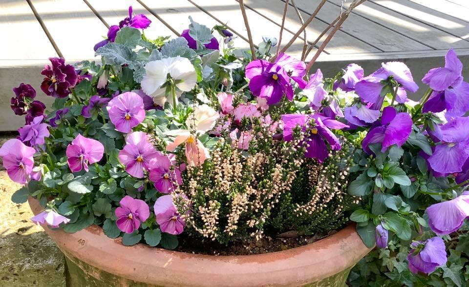 春の花_b0236186_10552321.jpg