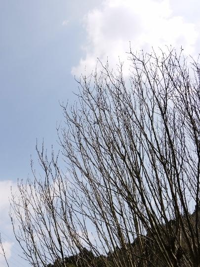 ポカポカのお天気~白い子 黒い子_e0167795_17321917.jpg