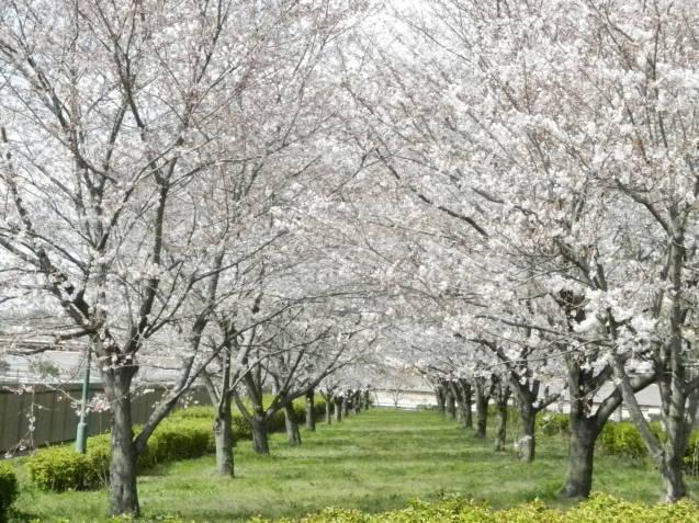 春ですね... / koba_d0135801_23171859.jpg