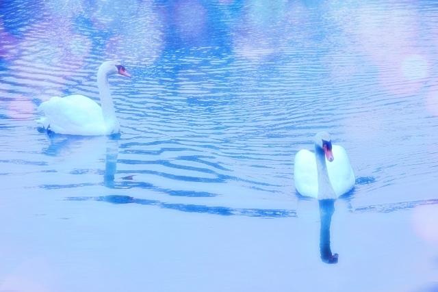 カワセミの飛翔 仲良し白鳥_e0413711_10533068.jpg