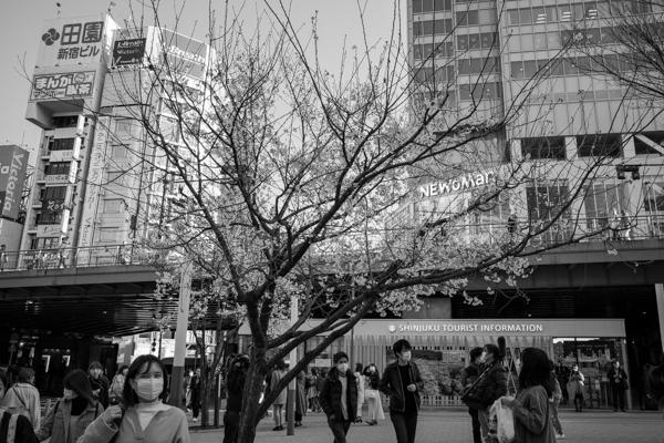 2020.03.19 新宿、春_a0390712_18590097.jpg