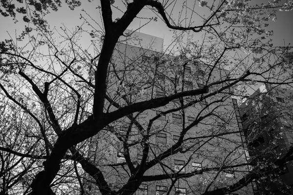 2020.03.19 新宿、春_a0390712_18592570.jpg