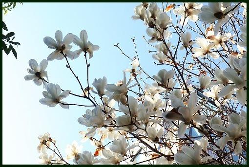 花ごよみ_a0134114_22012743.jpg