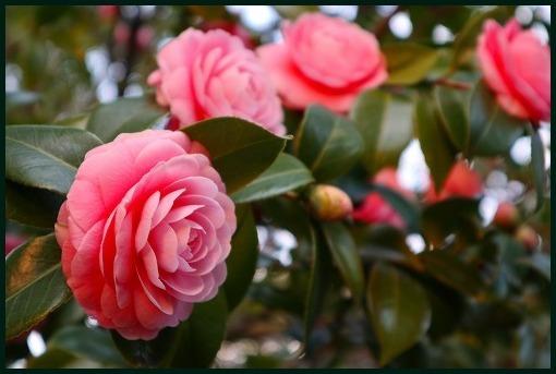 花ごよみ_a0134114_22013700.jpg