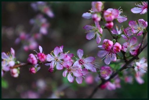 花ごよみ_a0134114_22014705.jpg