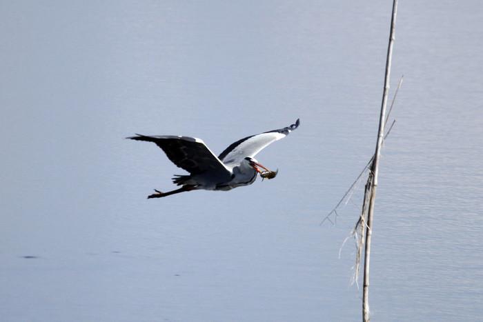 MFでの探鳥で出会えた鳥たち_f0239515_171381.jpg