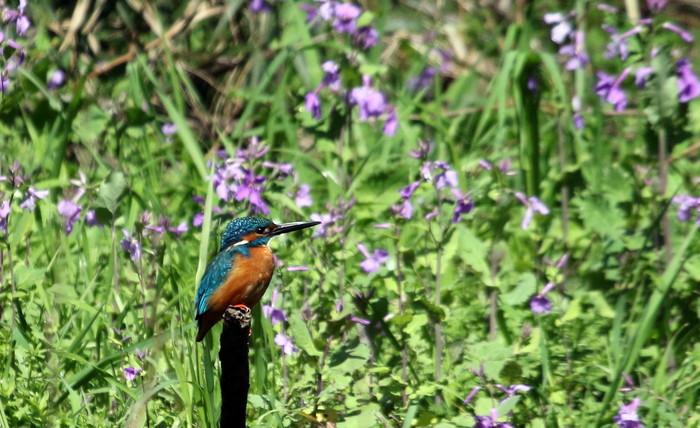 MFでの探鳥で出会えた鳥たち_f0239515_1723553.jpg