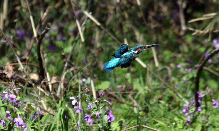 MFでの探鳥で出会えた鳥たち_f0239515_1725371.jpg