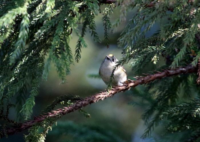 MFでの探鳥で出会えた鳥たち_f0239515_1741164.jpg