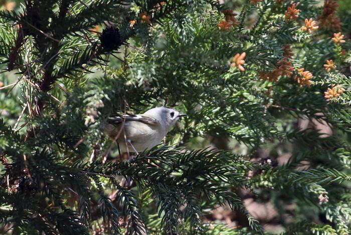 MFでの探鳥で出会えた鳥たち_f0239515_1743083.jpg
