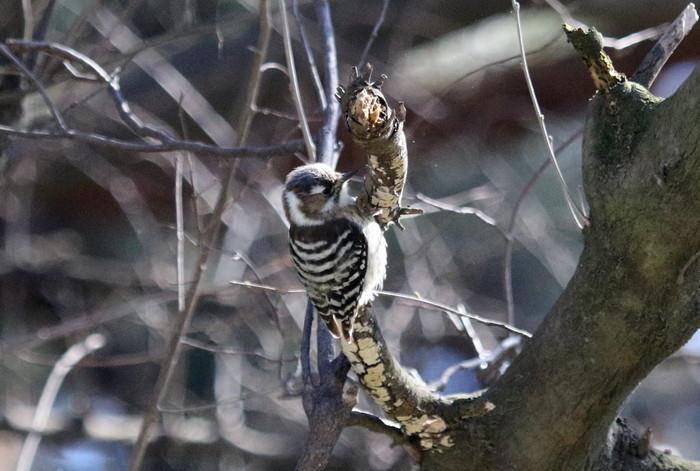 MFでの探鳥で出会えた鳥たち_f0239515_175568.jpg