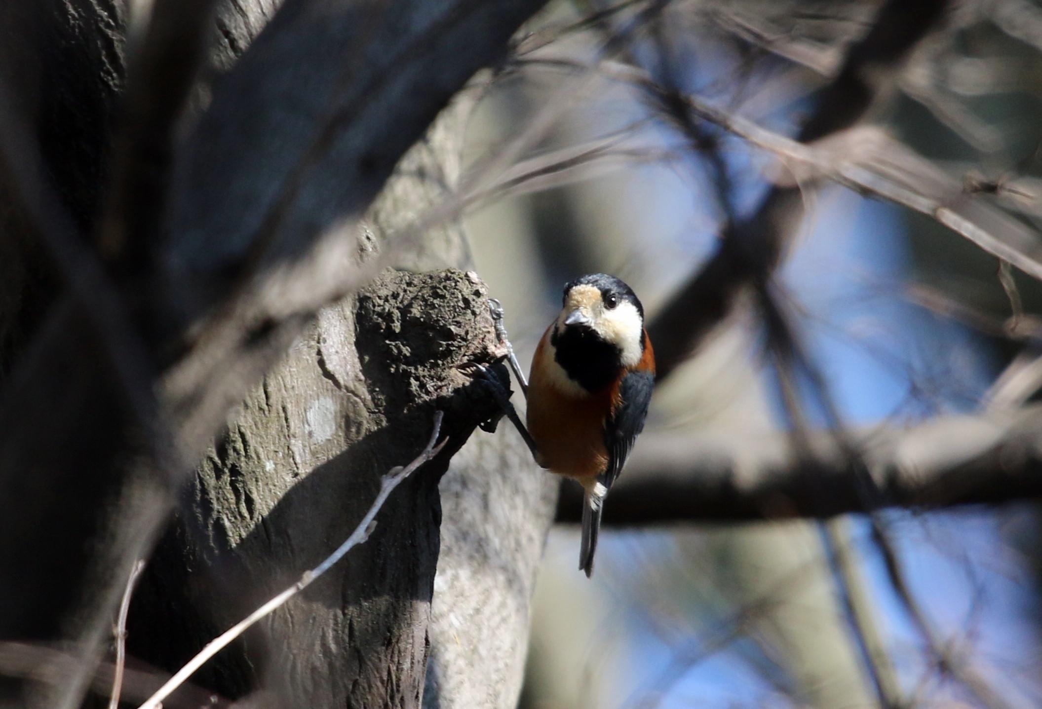 MFでの探鳥で出会えた鳥たち_f0239515_176759.jpg