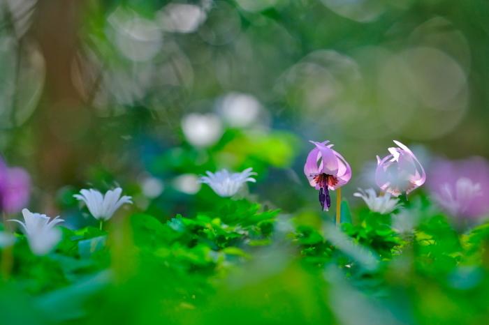 春の妖精達ち_c0167028_23433816.jpg