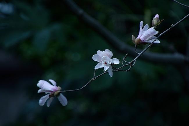 庭園の春_d0264733_17061150.jpg
