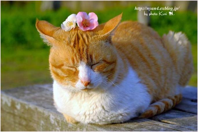 春が来た_f0166234_00430890.jpg