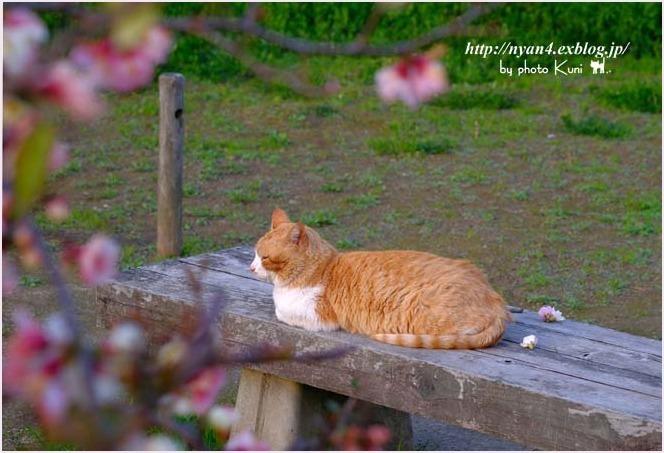 春が来た_f0166234_00432831.jpg