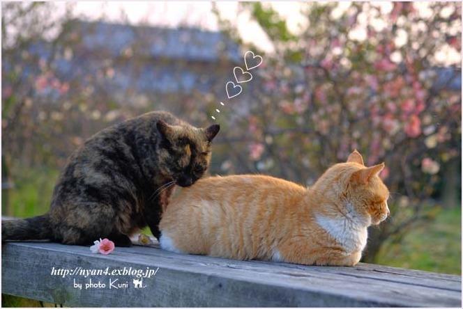 春が来た_f0166234_00445688.jpg
