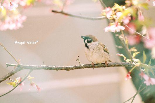 春でチュン_d0147742_18501285.jpg