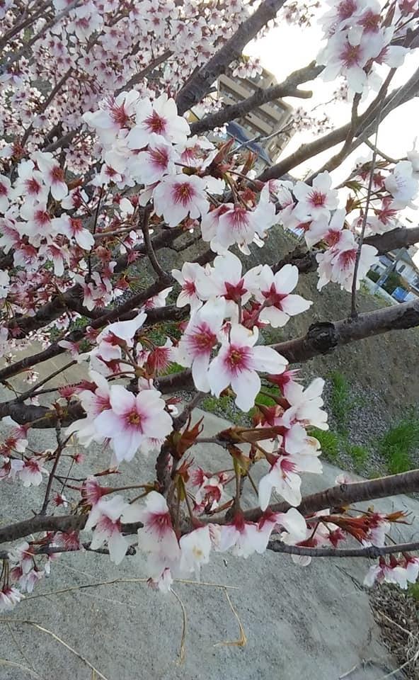 春のお仕事とあれやこれや_d0249444_12114035.jpg