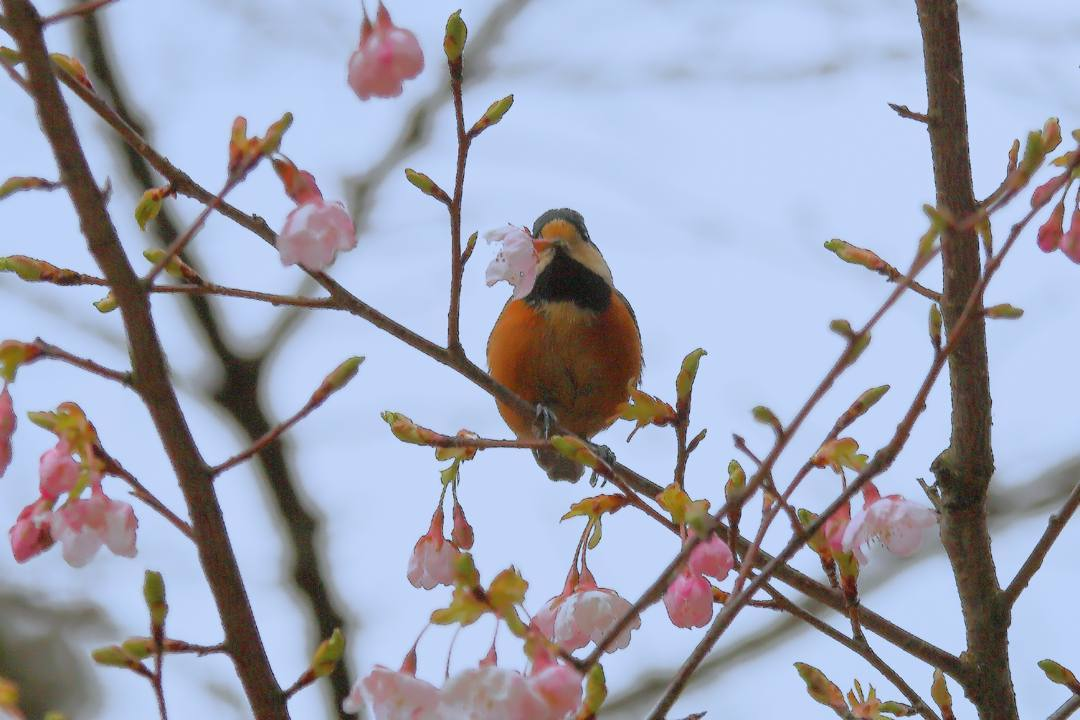 花に鳥_e0403850_21583222.jpg