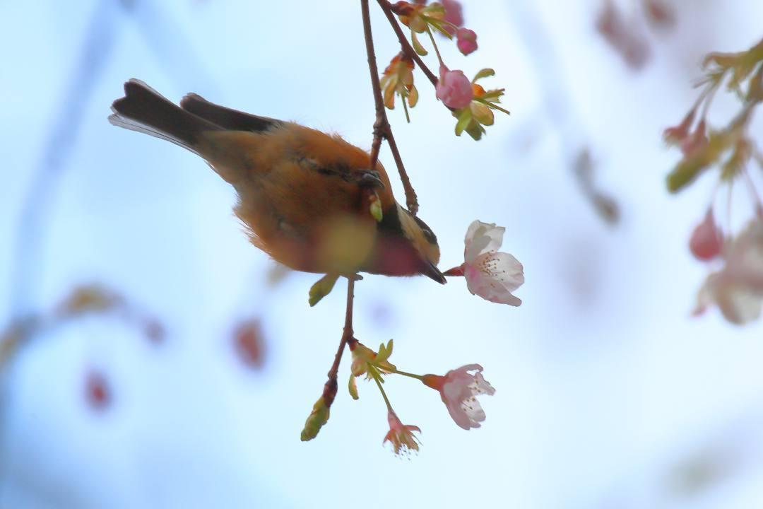 花に鳥_e0403850_21583855.jpg