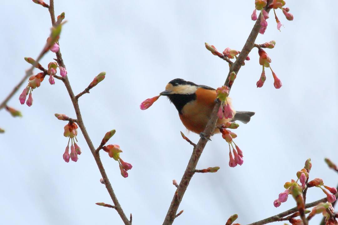 花に鳥_e0403850_21584266.jpg