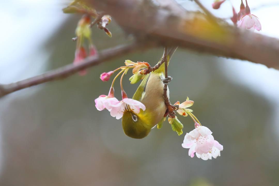 花に鳥_e0403850_21585929.jpg