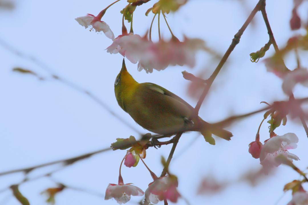 花に鳥_e0403850_21590909.jpg