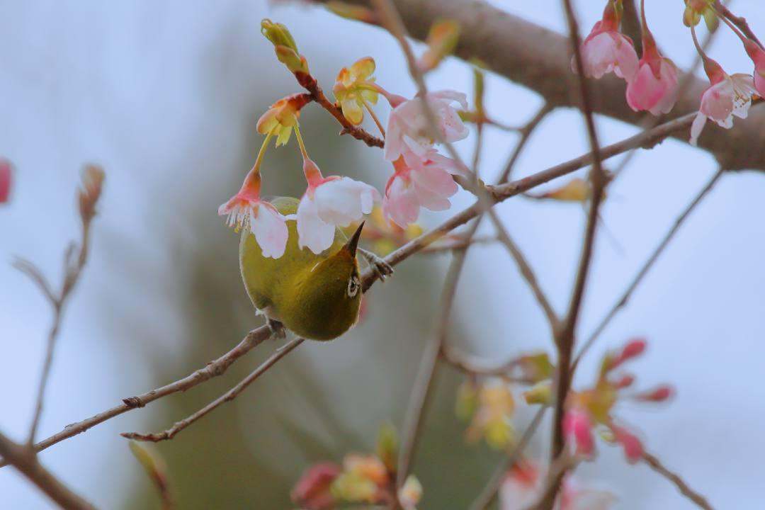花に鳥_e0403850_21591413.jpg