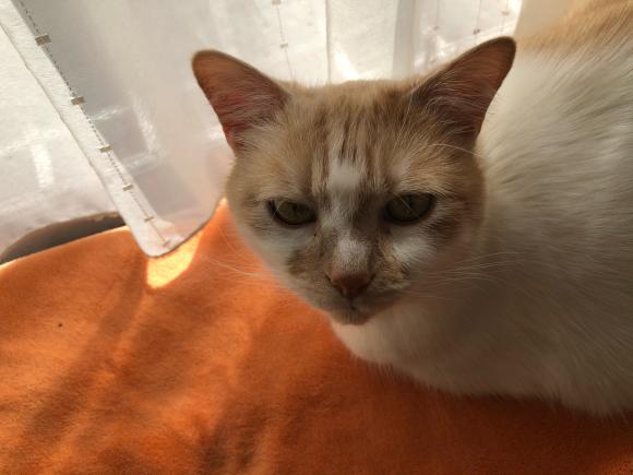 続:うちの猫にはハゲがある_d0085254_12243342.jpg