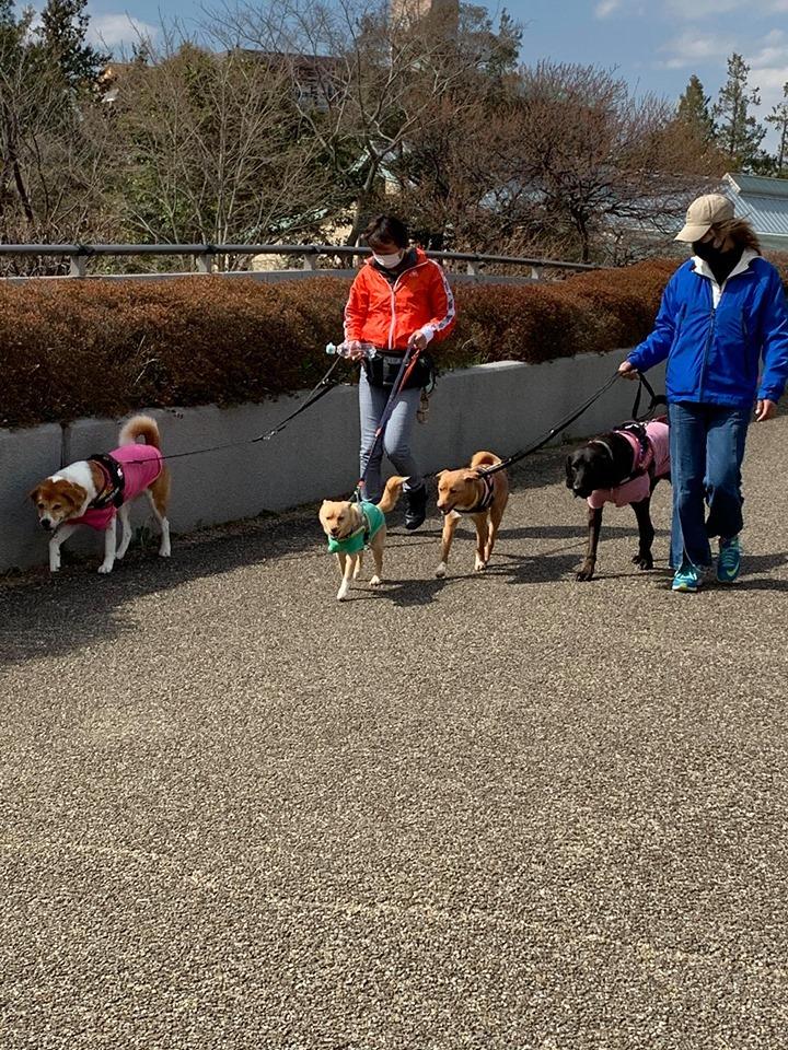 昭和記念公園パックウォークコースのご案内~デイ麦ママさんのナビにて♪ _c0372561_00113496.jpg