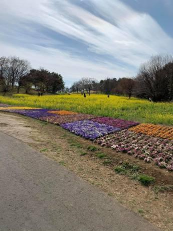 昭和記念公園パックウォークコースのご案内~デイ麦ママさんのナビにて♪ _c0372561_00184837.jpg