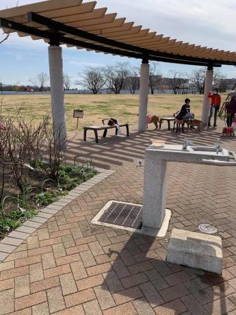 昭和記念公園パックウォークコースのご案内~デイ麦ママさんのナビにて♪ _c0372561_00243568.jpg