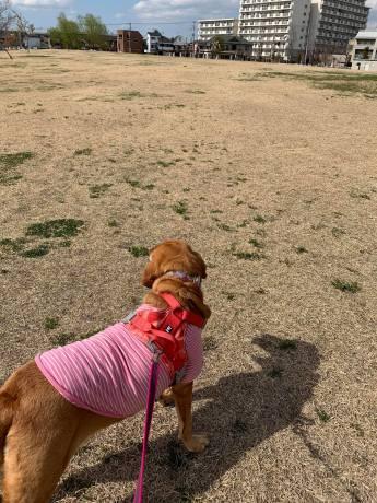昭和記念公園パックウォークコースのご案内~デイ麦ママさんのナビにて♪ _c0372561_00244030.jpg