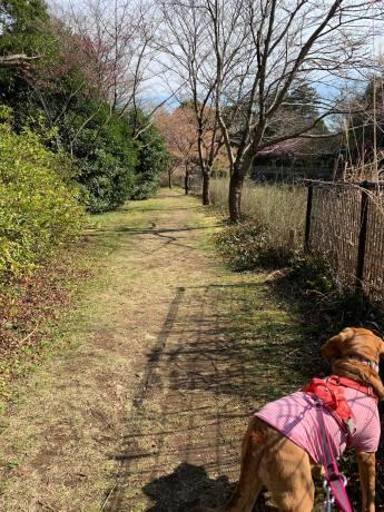 昭和記念公園パックウォークコースのご案内~デイ麦ママさんのナビにて♪ _c0372561_00245820.jpg