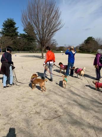 昭和記念公園パックウォークコースのご案内~デイ麦ママさんのナビにて♪ _c0372561_00250653.jpg
