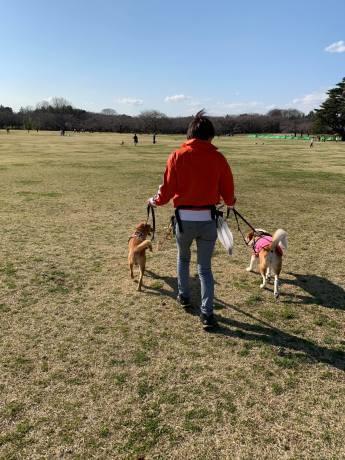 昭和記念公園パックウォークコースのご案内~デイ麦ママさんのナビにて♪ _c0372561_16124600.jpg