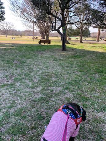 昭和記念公園パックウォークコースのご案内~デイ麦ママさんのナビにて♪ _c0372561_16130593.jpg