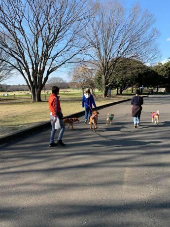 昭和記念公園パックウォークコースのご案内~デイ麦ママさんのナビにて♪ _c0372561_16131429.jpg
