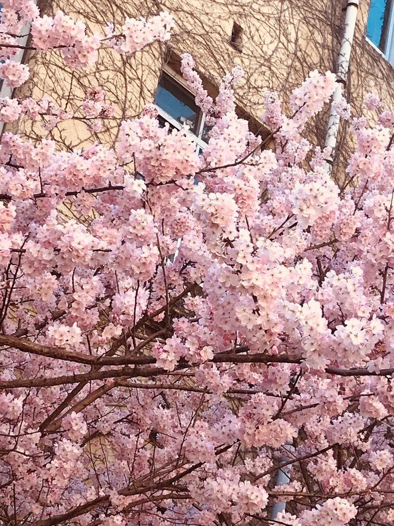 春のひととき『ちくちく手縫いの会』ご報告_b0153663_16321117.jpeg