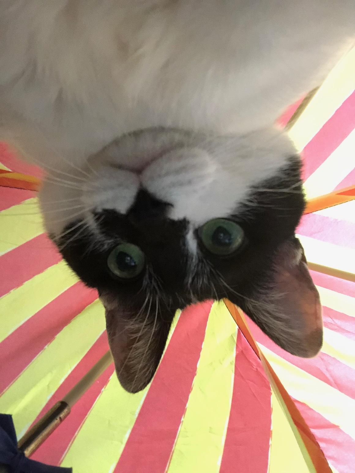 猫と菌_a0064067_22483980.jpg