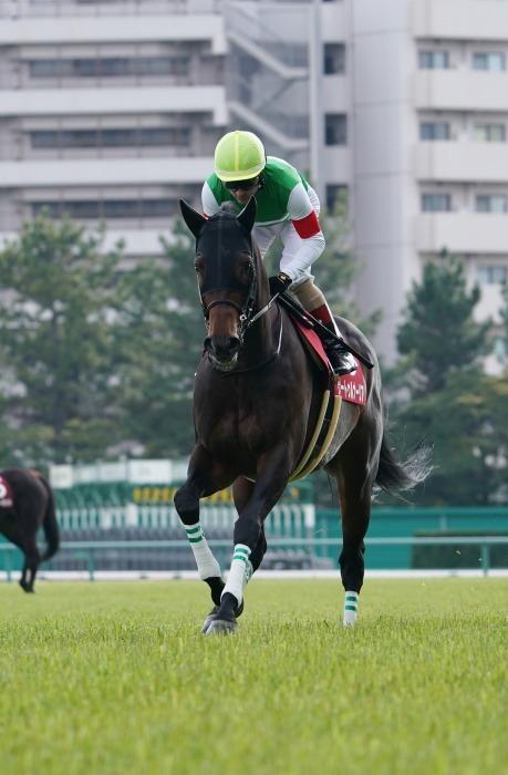 現役最強馬の1頭サートゥルナーリアが出走、第56回金鯱賞 GⅡ_b0173867_21170794.jpg