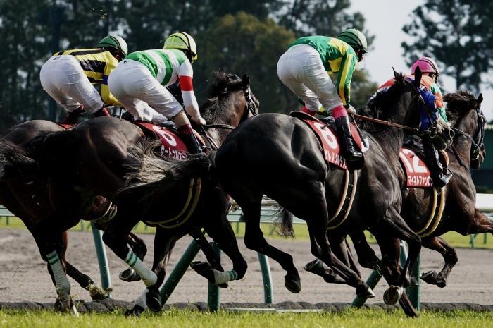 現役最強馬の1頭サートゥルナーリアが出走、第56回金鯱賞 GⅡ_b0173867_21184293.jpg