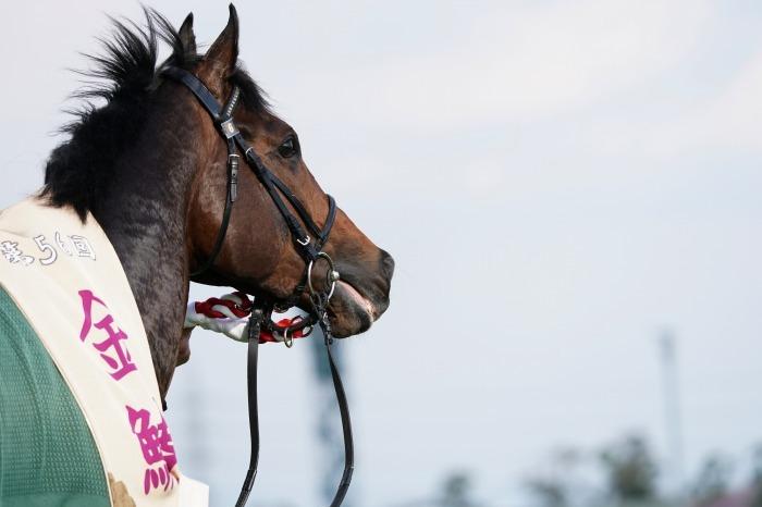 現役最強馬の1頭サートゥルナーリアが出走、第56回金鯱賞 GⅡ_b0173867_21201190.jpg